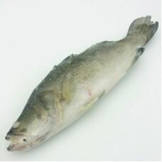 莽草鱼(约1kg/条)