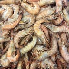 澳洲野生基围虾