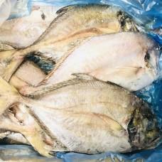 澳洲鲳鱼(约700G)